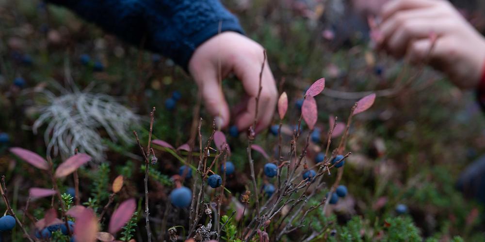 Allemandretten i Sverige   Eventyrsport   Hvad må du spise fra naturen?