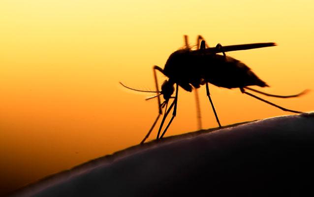 Sådan undgår du at blive ædt af myg på tur