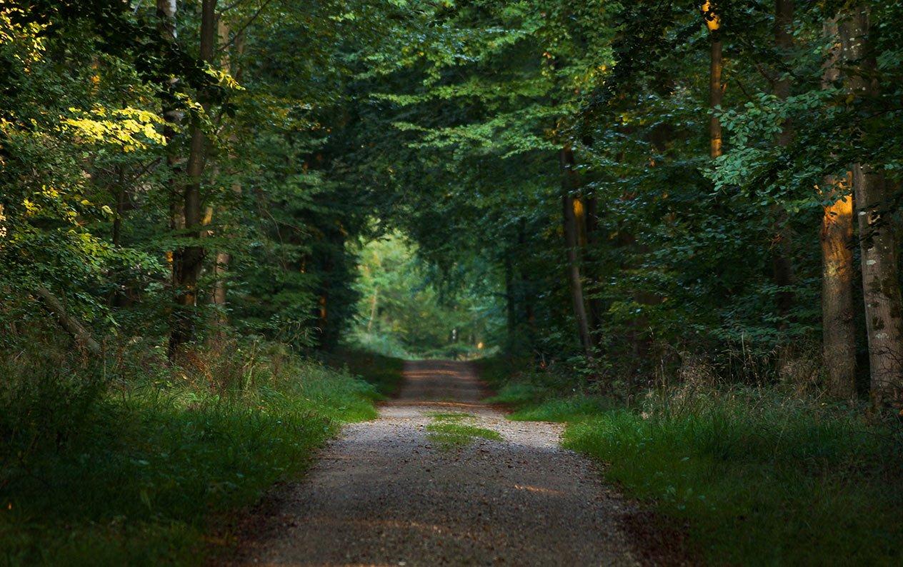 Det må du i de danske skove