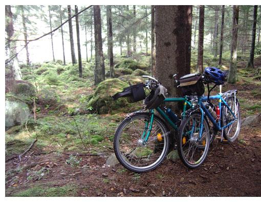 Cykler i skoven